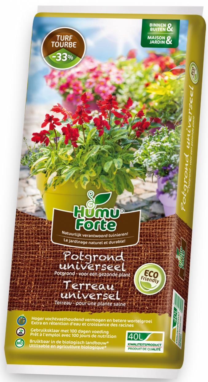 gezonde planten voor in huis